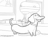 Раскраска тайная жизнь домашних животных - b