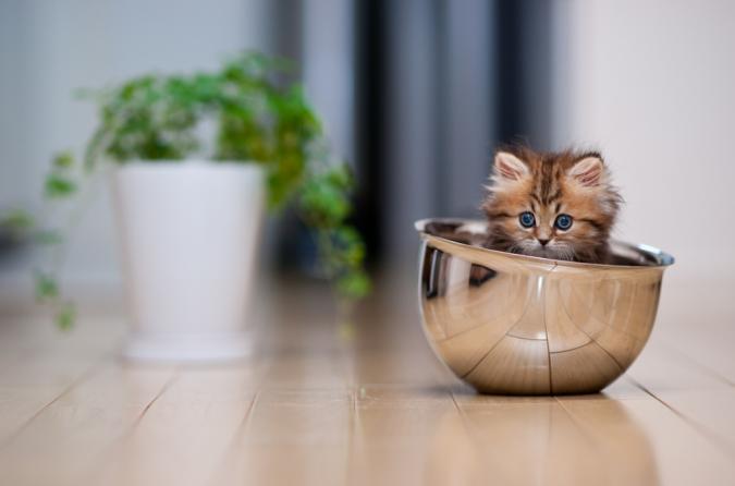 Фото сессия очаровательного котенка