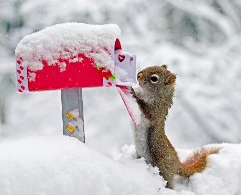 Зимние аватарки, бесплатные фото, обои ...: pictures11.ru/zimnie-avatarki.html