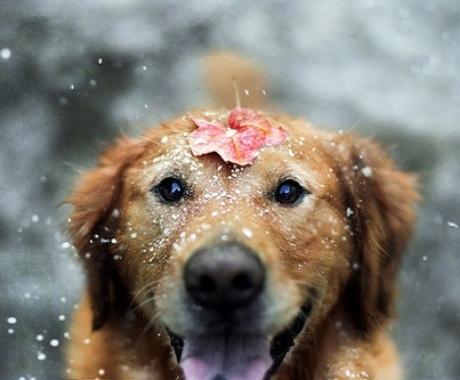 хаски фото щенки и взрослые собаки