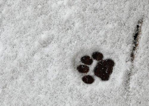Зимние собаки