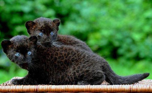 Фотографии детенышей диких животных