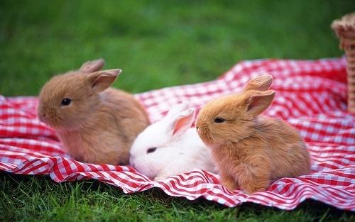 кролик аватарка: