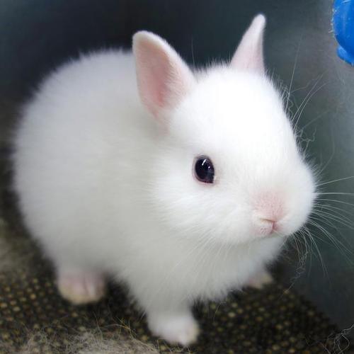 кролики фото белый великан
