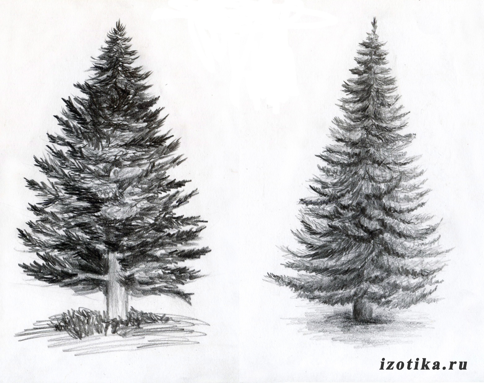 рисунки природа простым карандашом: