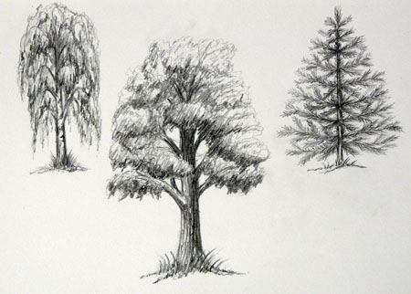 Как рисовать лиственные и хвойные деревья