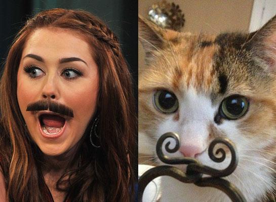 Знаменитости и кошки: забавные совпадения - YouLoveIt.ru кэти перри инстаграм