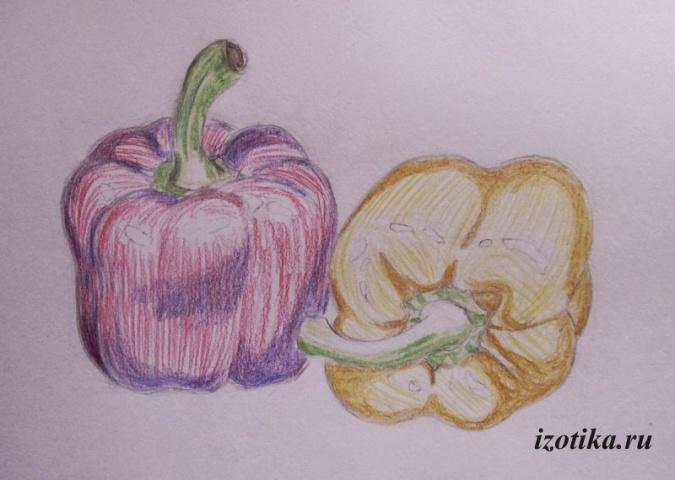 Рисуем перцы цветными карандашами