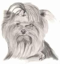 Способ рисования шерсти у животных