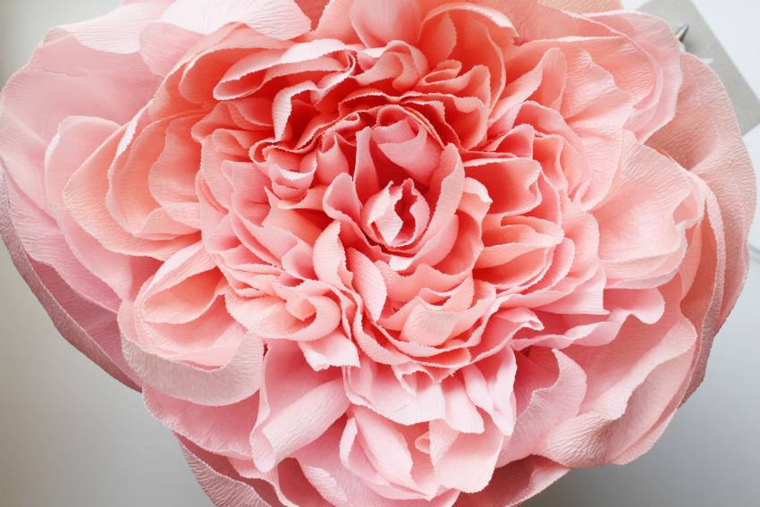 Пионовидная роза из гофрированной бумаги мастер класс