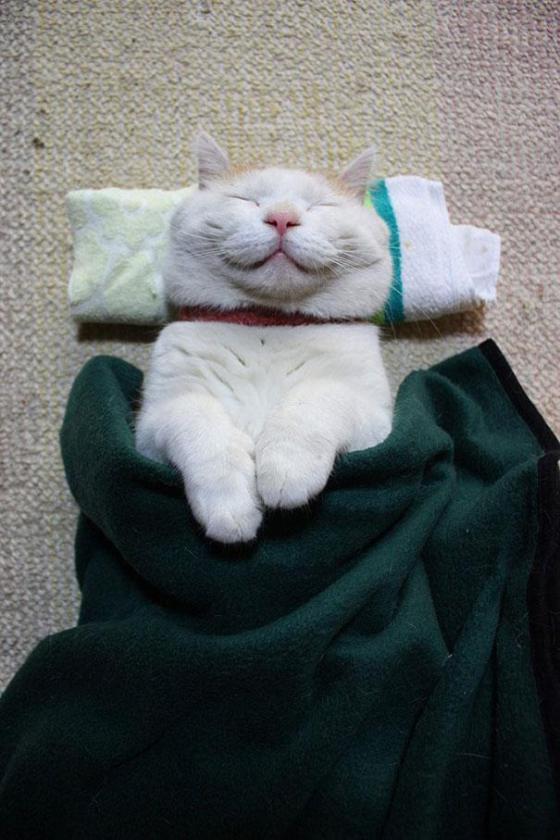 Самый довольный кот