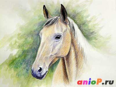Рисуем голову лошади акварельными карандашами