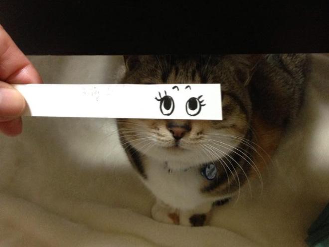 Кошки и нарисованные глаза youloveit ru