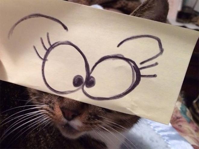 Печати кошки и нарисованные глаза