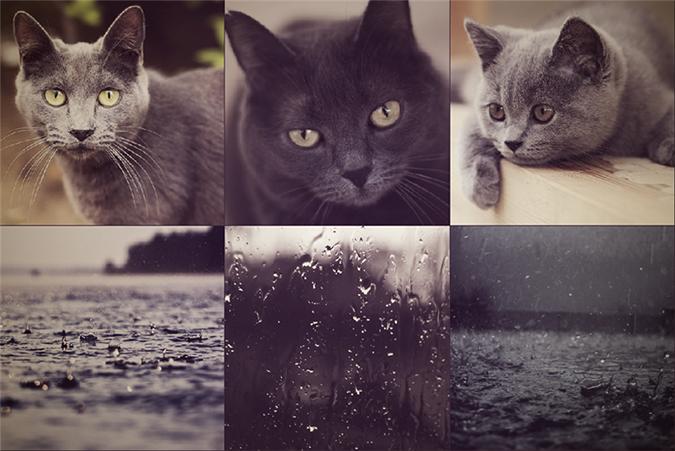 Кошки и природные цвета
