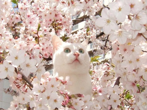 Картинки про весну с кошками