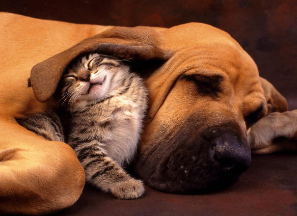Необычные спящие друзья
