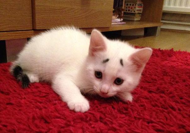 Кавайняшка: Котенок с особенными бровями