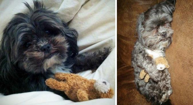 Животные и их игрушки