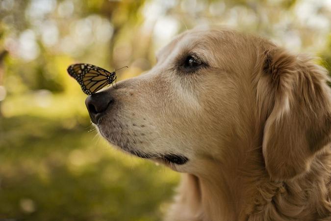 Кавайняшка: Кошки, собаки и бабочки