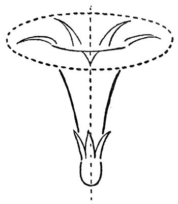 Как рисовать красивую ромашку