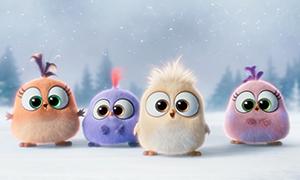 Angry Birds в кино: Новогоднее видео поздравление от птенцов