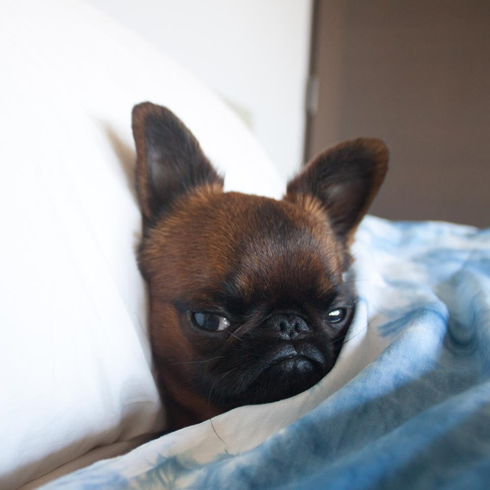 Grumpiest Dog Breed