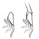 Як малювати руки, ноги і ступні - уроки малювання