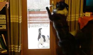 Умная собака научилась открывать дверь для кошки