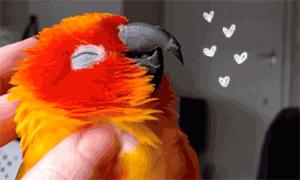 Видео: Попугаю нравятся почесывания