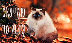 Пушистые кошки и осень