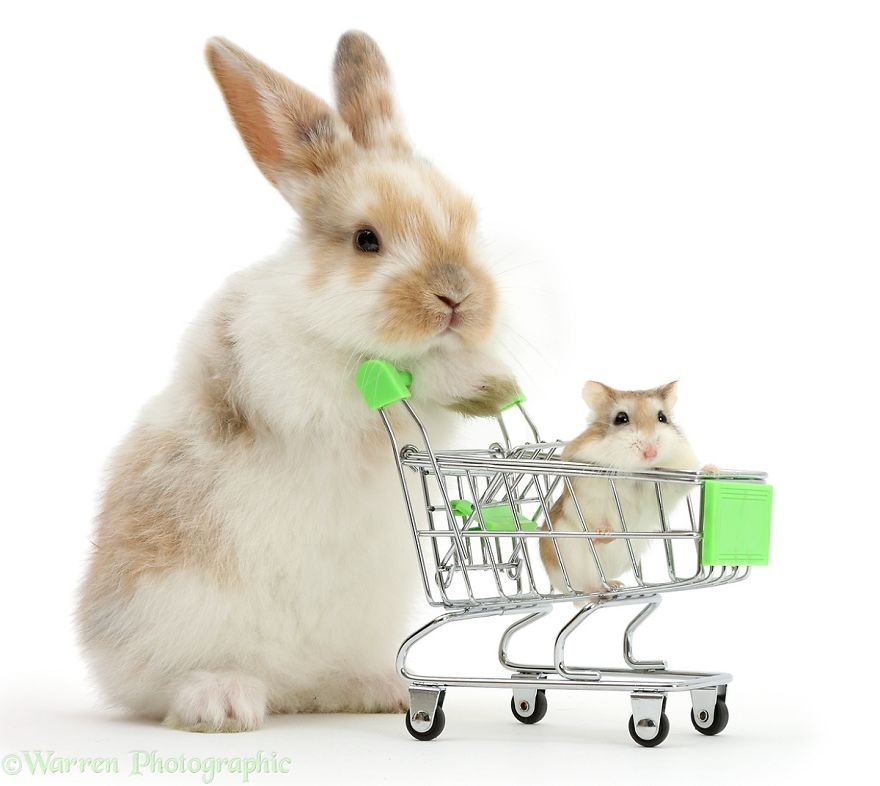 Няшные картинки кролики