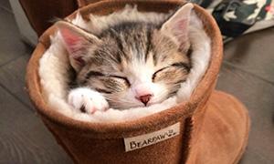 10 доказательств того, что кошки могут уснуть где угодно