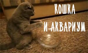 Еще одно доказательство, что кошки - это жидкости