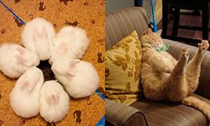 10 фотографий животных покоривших интернет