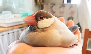 Животные и птицы, которые умеют таять