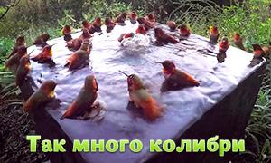 Ты когда-нибудь видела столько колибри сразу?