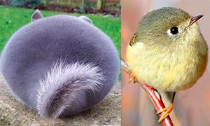 Кавайняшка: Кругляшки в мире животных