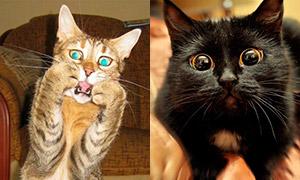 Доказательства того, насколько кошки бывают эмоциональны