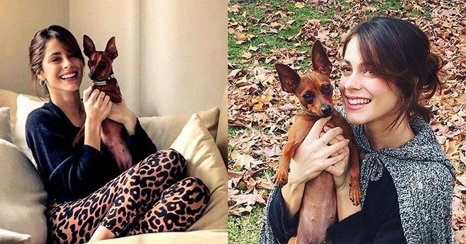 Собака Мартины Штоссель по кличке Ольга