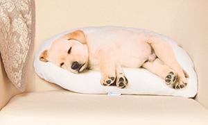 Милота: Подушки со спящими животными