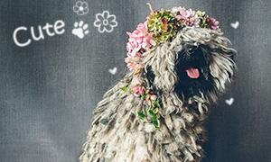 Кавайняшка: Собаки в цветочных венках