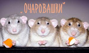 Доказательства того, что крыски могут быть очень милыми